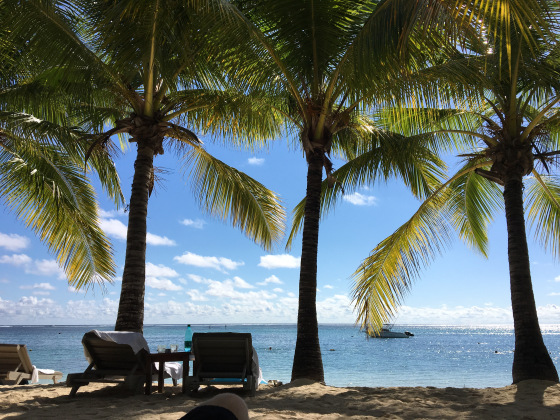 Mauritius, palm tree, view